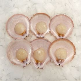 Scallops Roe Of