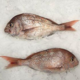 Snapper Whole NZ